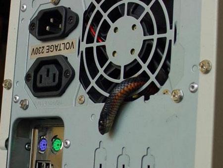 cpu-snake-110